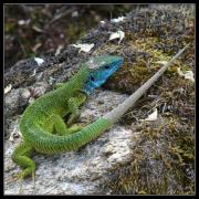 Nesoutěžní foto, Lukáš Slouka: Tak malá a tak barevná